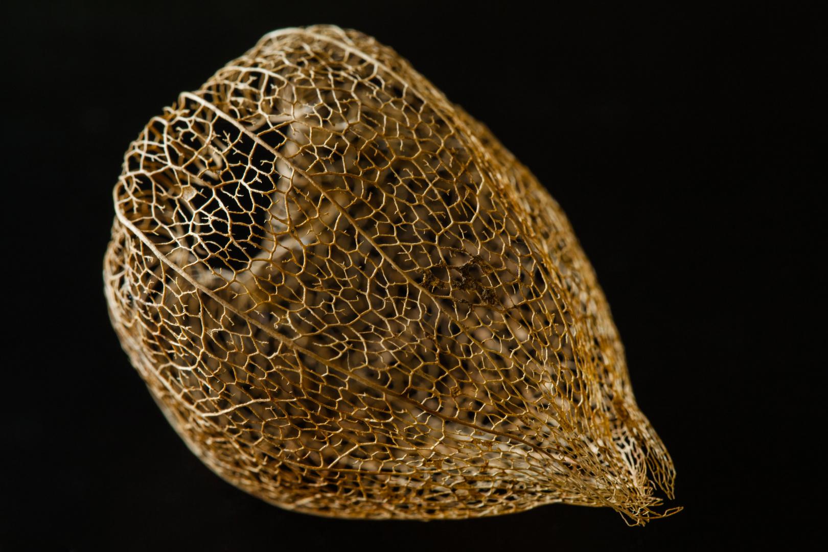 Lampionblume Skelettstruktur Foto & Bild | natur, pflanzen, blüten ...