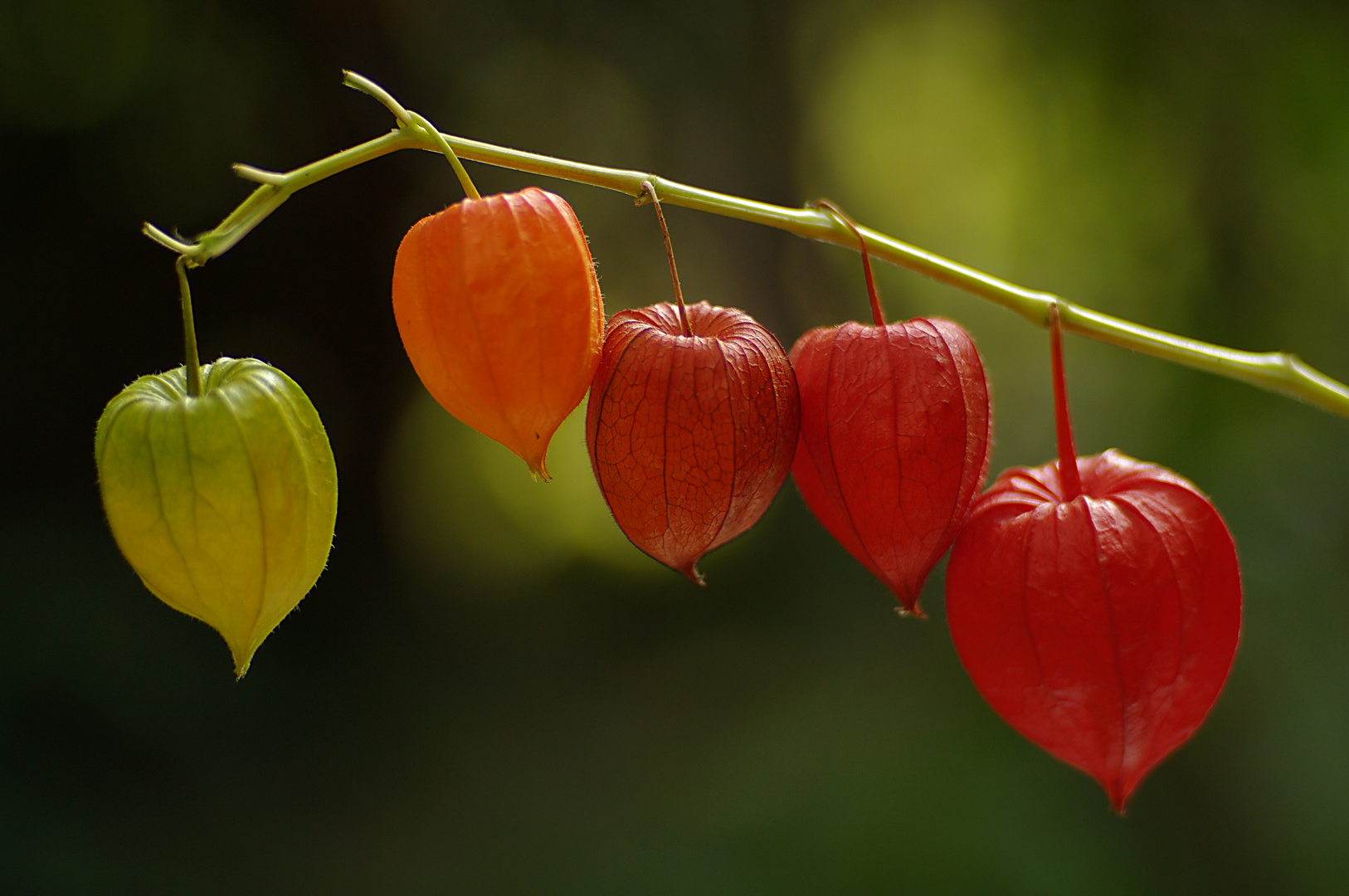 Lampions im Herbst