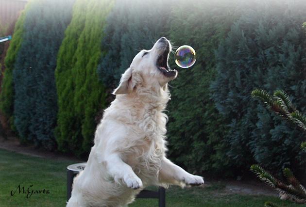 Lancelot beim Seifenblasen fangen