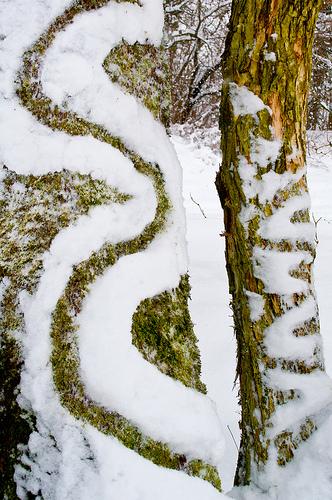 Land Art- Tree Snakes