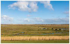 Land der Gänse und Rindviecher