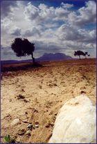 Land des Olivenbaums