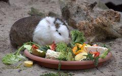 Landestypisch gibt es zu Ostern gefülltes Kaninchen
