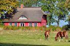 Landhaus mit Pferden