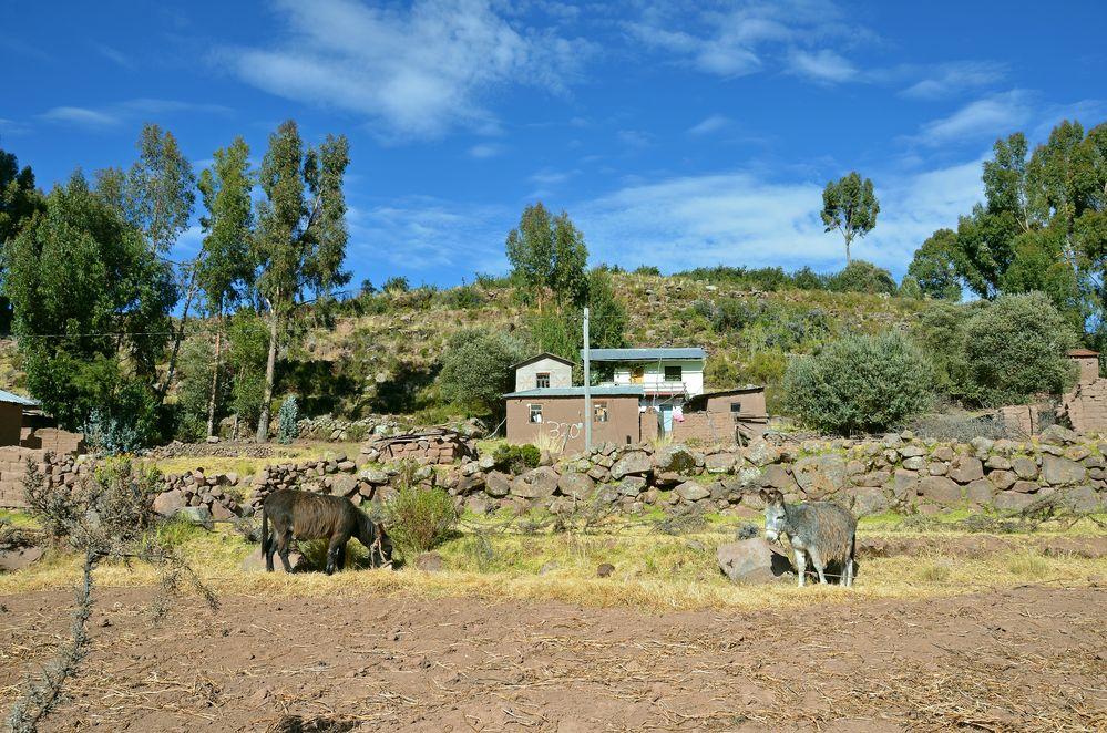 Landleben auf der Halbinsel Capachica am Titicacasee