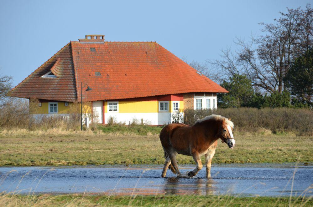Landlich vor Max Taut Haus in Vitte