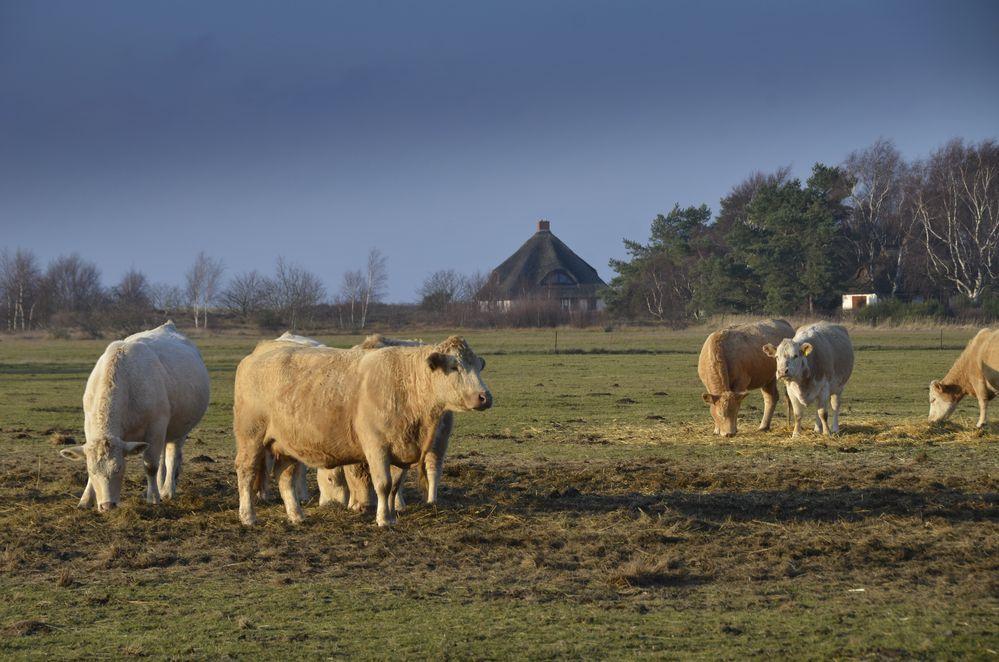 Landliebe Hiddensee