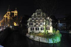 Landnase im Neckar :-)