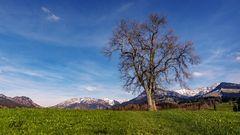 Landscape Allgäu