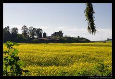 Landscape..