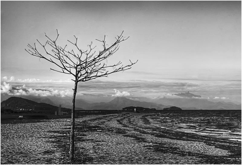 landscape b/n