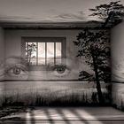 Landscape captivity...