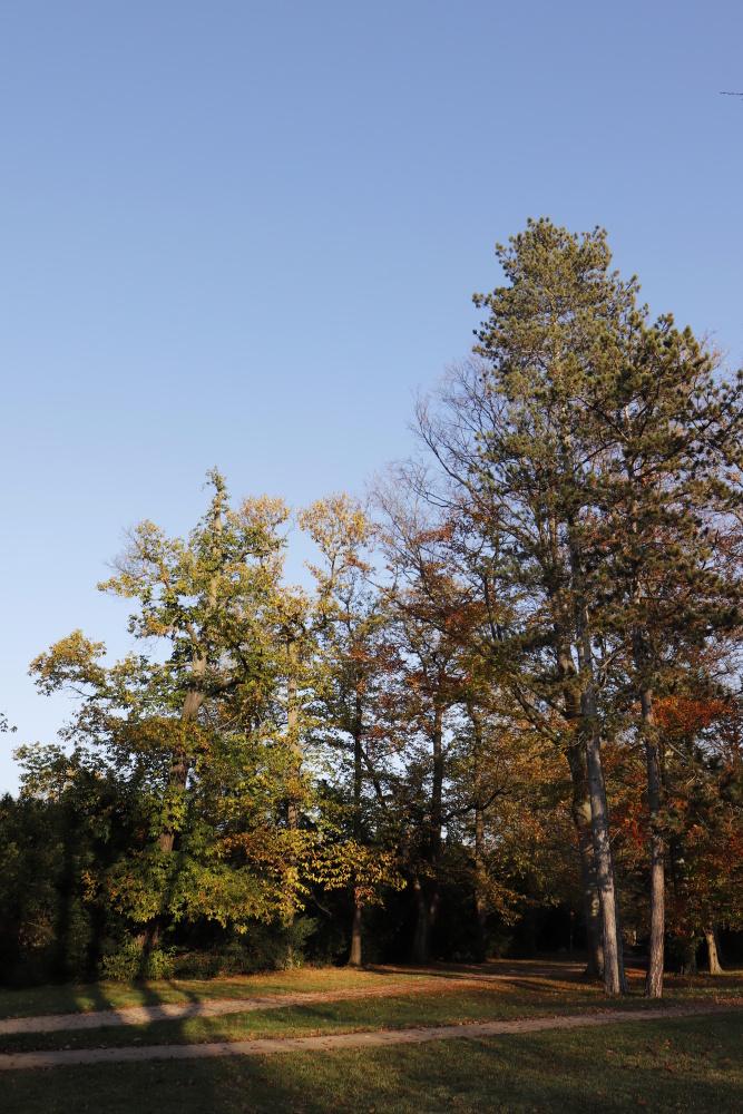 """Landscape garden """"Luisium"""" - image 1"""