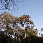 """Landscape garden """"Luisium"""" - image 2"""