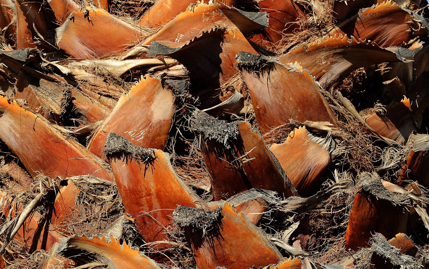 Landschaft an einem Palmenstamm