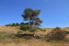 Landschaft auf Hiddensee