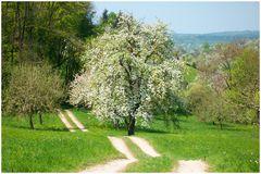 Landschaft bei Brucken/Teck (1)