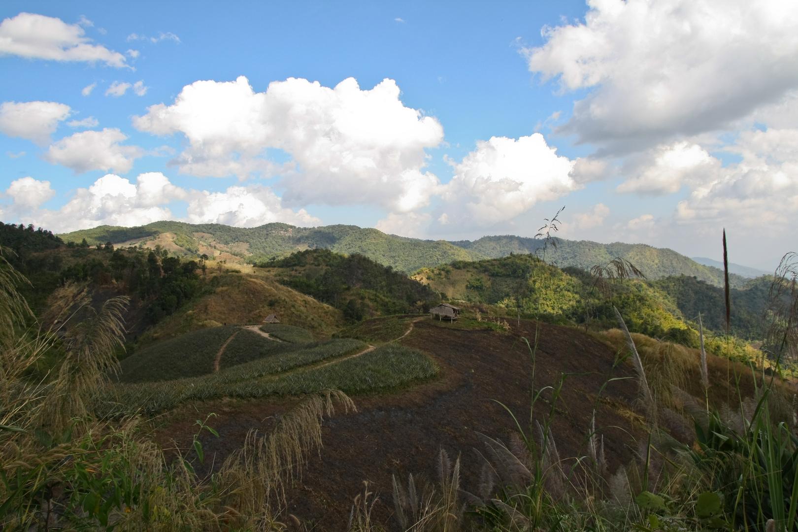 Landschaft bei Chiang Rai