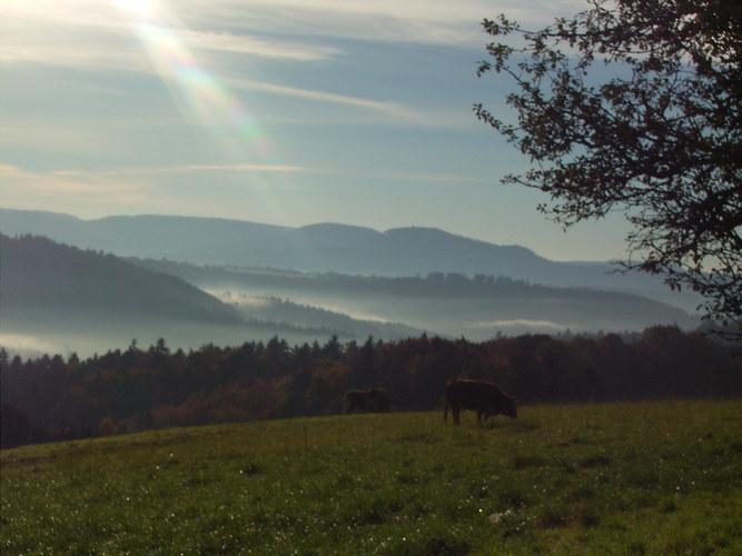 Landschaft bei Lorch im Remstal , heute morgen 9.15 Uhr