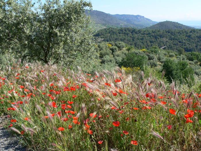 Landschaft bei Manosque