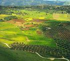 Landschaft bei Ronda
