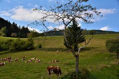 Landschaft bei Sellnek, Schwarzwald