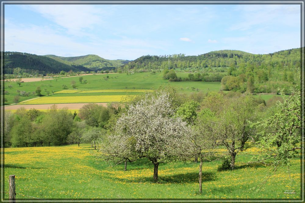 Landschaft der Vogesen / Lembach / Wissembourg