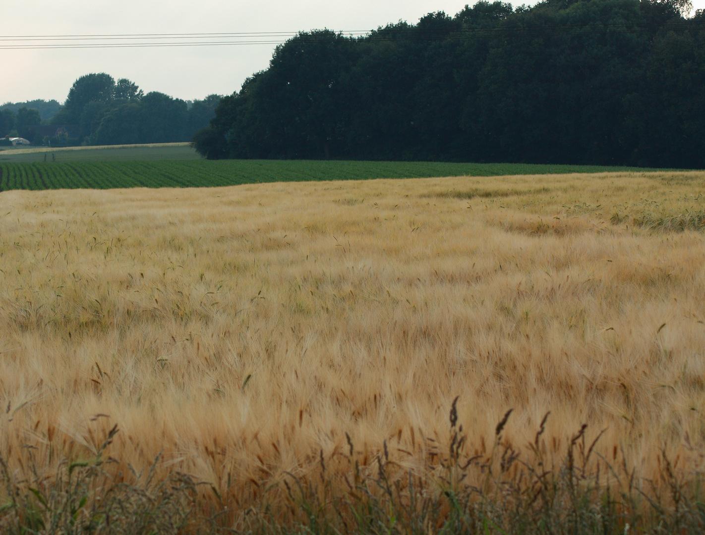 Landschaft Eving