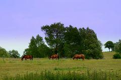 Landschaft Hiddensee