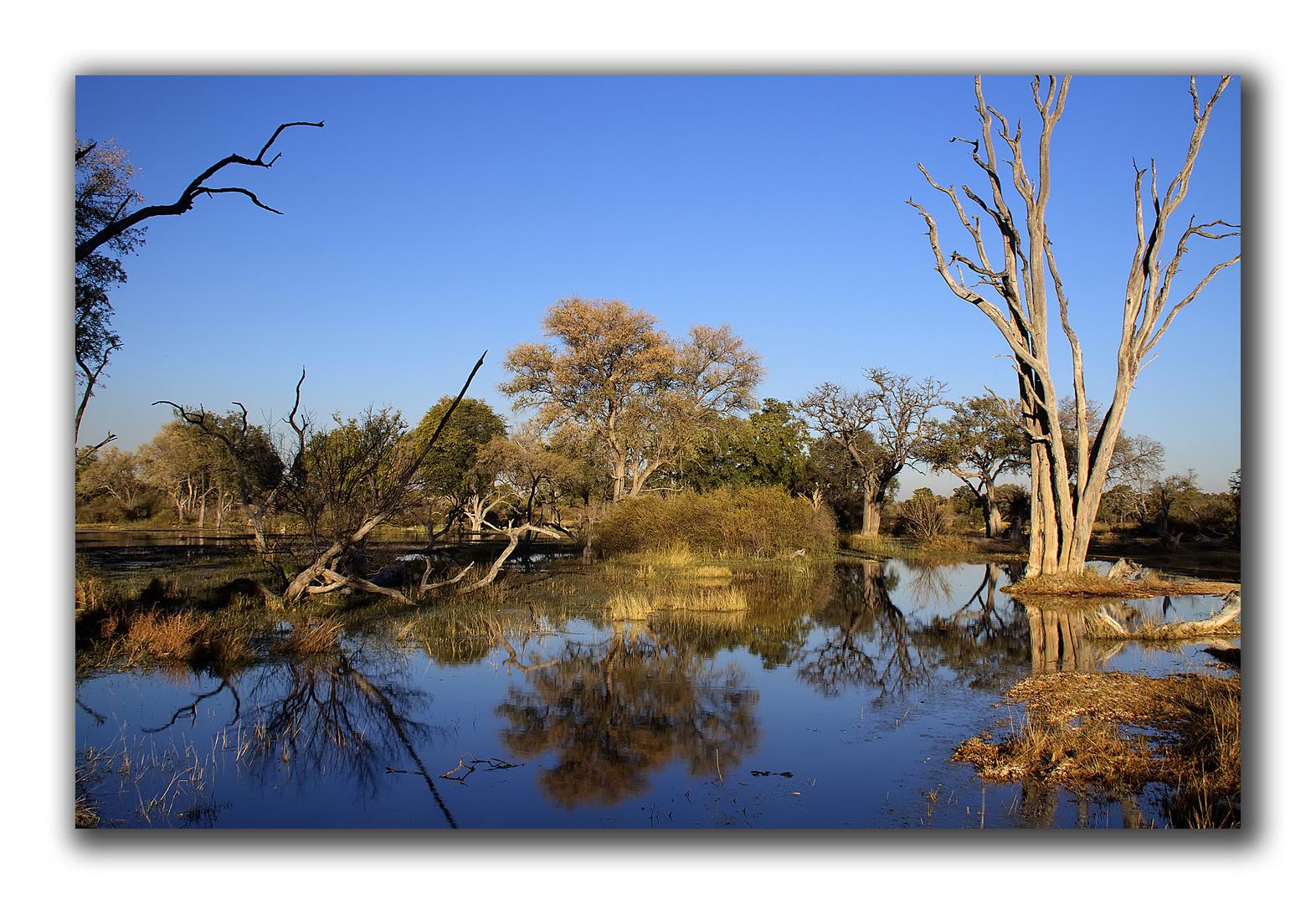 Landschaft im Moremi Game Reserve