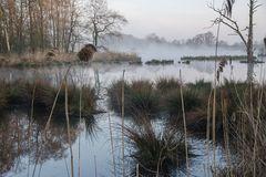 Landschaft im Morgennebel an der Nette