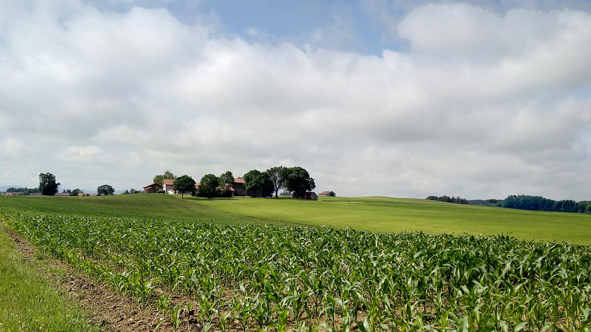 Landschaft im Oberallgäu