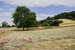 Landschaft im Odenwald II