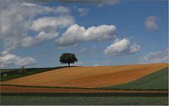Landschaft mit Bäumen.
