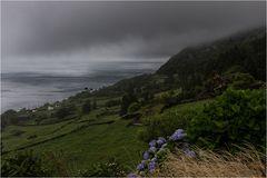 Landschaft mit Hortensien