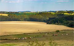 Landschaft mit Milchspendern