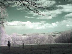 Landschaft mit Pferd