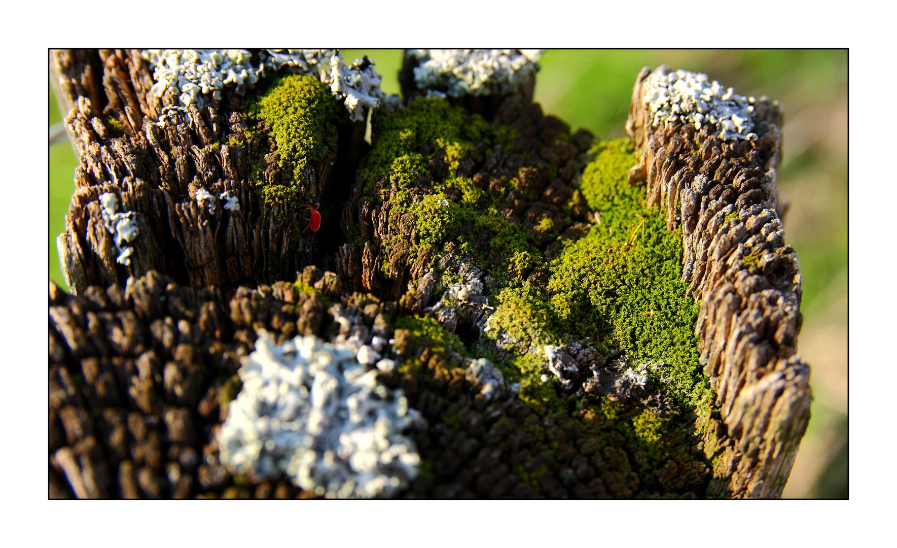 Landschaften #3
