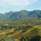 Landschaften und Reisterrasen In Ruteng Flores Indonesien