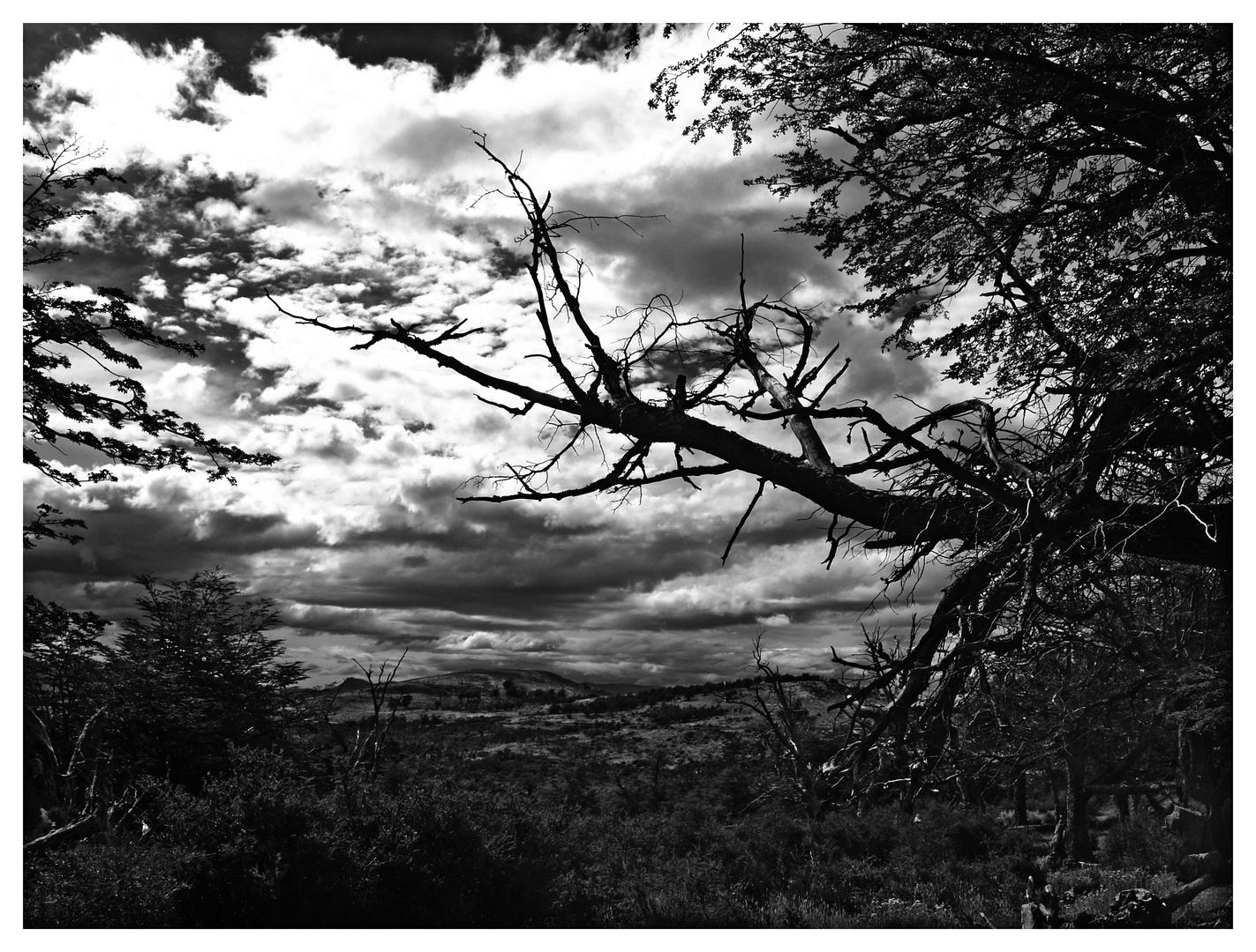 Landschafts-Traum ...