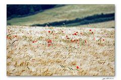 Landschaftsmalerwetter