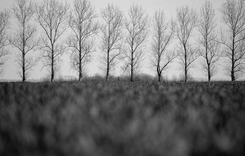 Landstrich in Grau