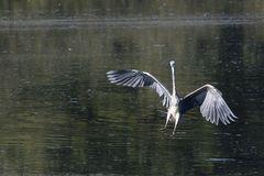 Landung-2309-3