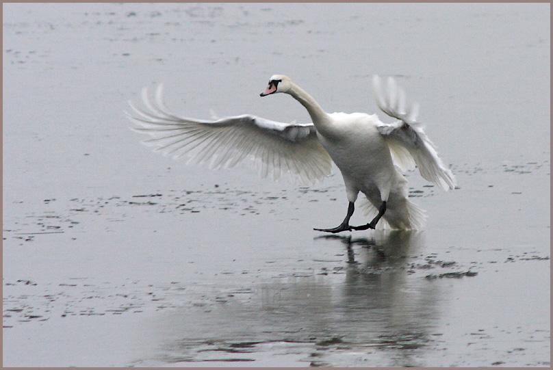 Landung auf dem Eis