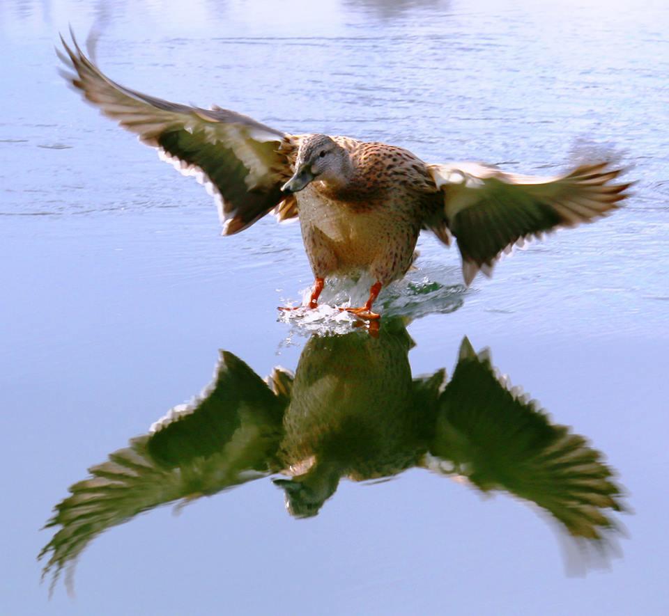 Landung Auf Den Hudson River Foto Bild Tiere Wildlife Wild