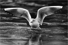 Landung auf Eis