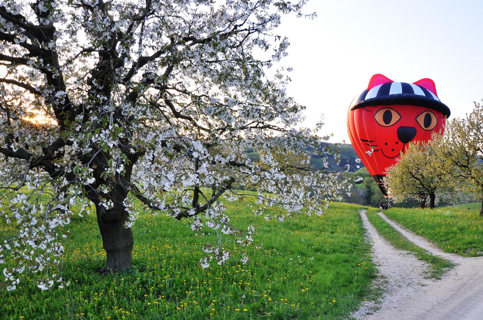 Landung bei den Kirschbäumen