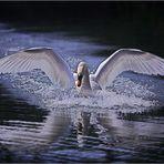 Landung ...