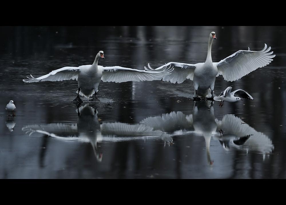 Landung der Giganten