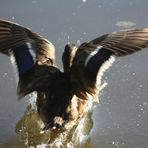 Landung perfekt - Aufnahme vergeigt (2)